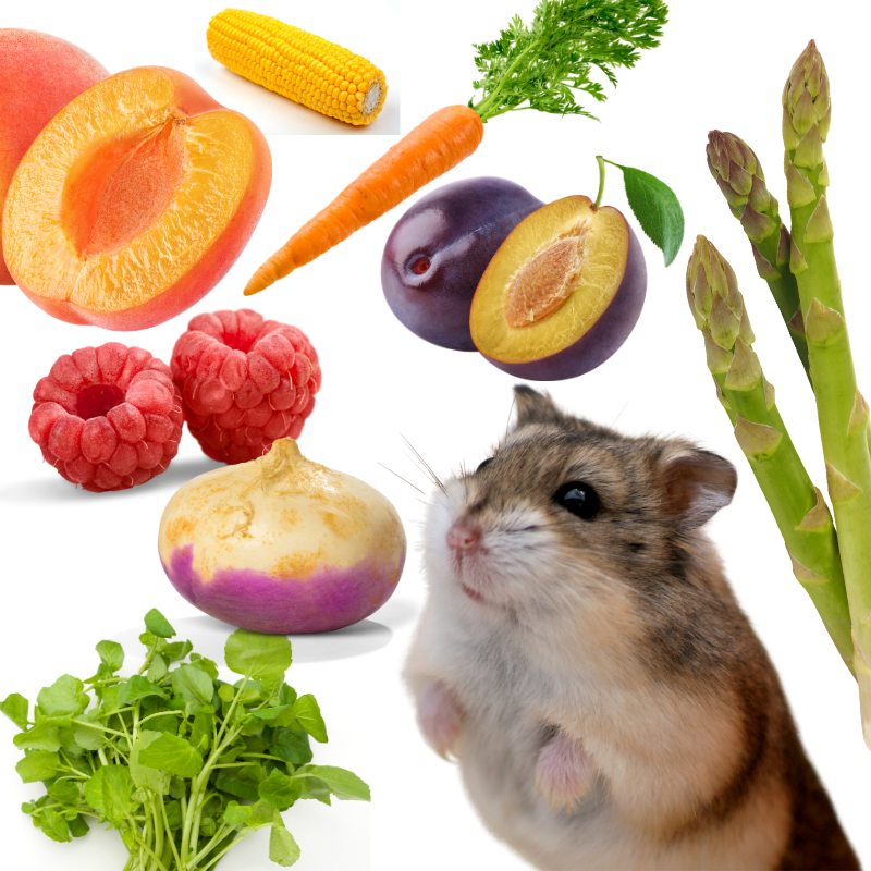 A Hamster and collage of safe human foods on a white background