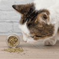 Cute tabby cat sniffing dried catnip.