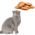 Grey sitting cat looking up at some almonds