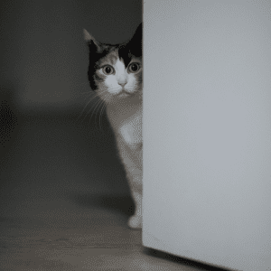 A cat looking out with a door half open