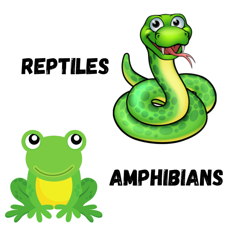 Cartoon - Frog and a snake - text - Reptiles And Amphibians