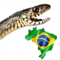 A snake and the Brazil flag in the shape of the country
