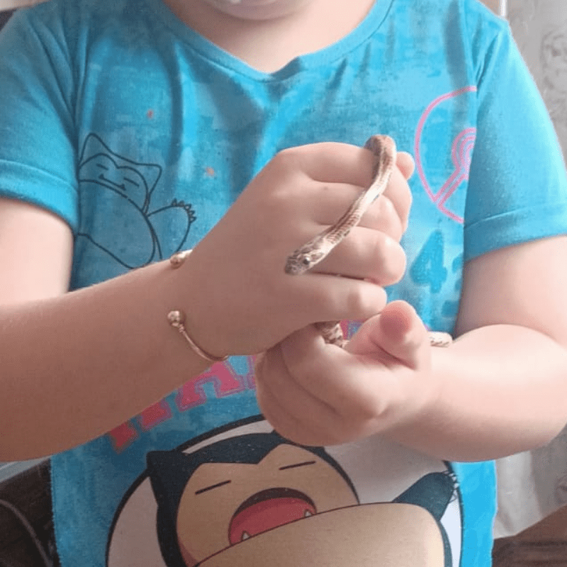A child holding her pet corn snake