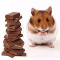 A hamster sitting next to some chocolate