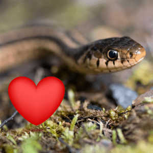 snake and a heart symbol