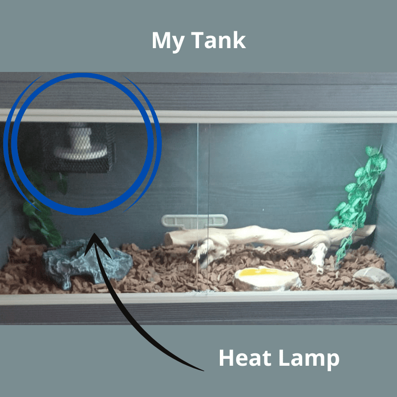 My snake tank showing the set up including the heat lamp