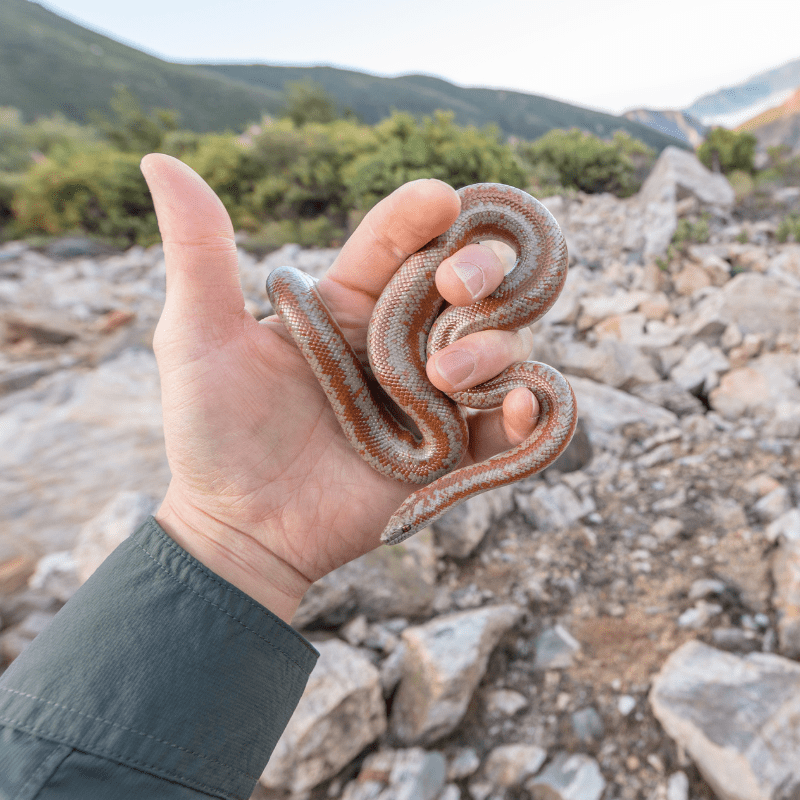 Small snake being held